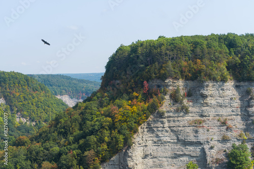 Eagle flying over a gorge at Letchworth State Park in Upstate New York Poster
