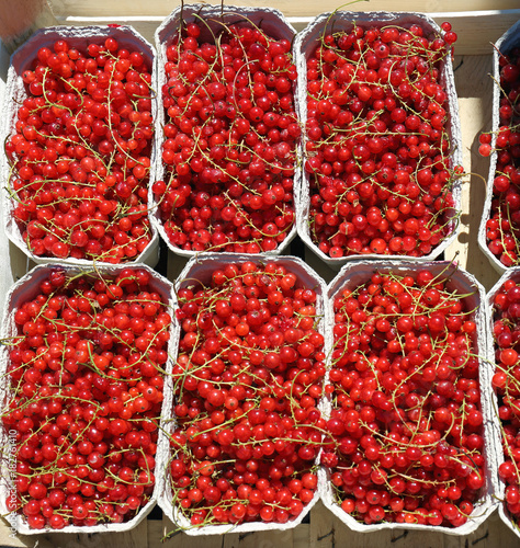 Red Currant in Trays