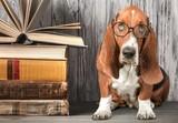 Dog. - 182761842