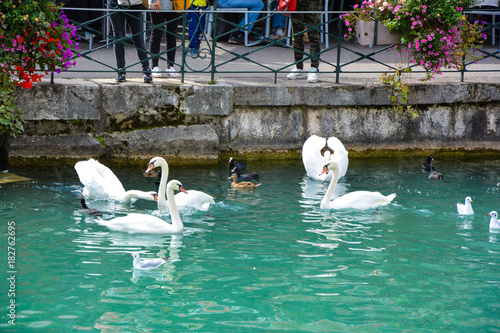 Fotobehang Zwaan Swans, ducks and gulls are floating near the canal shore near tourists in Annecy in France in the summer.