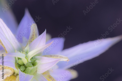 Foto op Plexiglas Purper Pink Flower in Bloom, Soft Focus, Copy Space