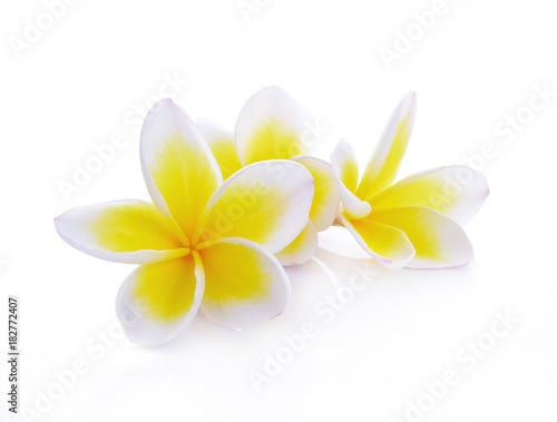 Plexiglas Plumeria beautiful white plumeria rubra flowers isolated on White background