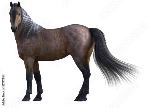 Poster Antilope Beautiful Bay Horse isolated on white. 3d render