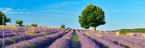 Aluminium Lavendel Lavender field in the morning