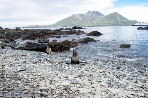 beautiful rocky beach in antarctic