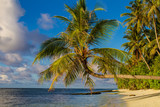 Morning tropical maldivian beach with palm and blue ocean - 182789479