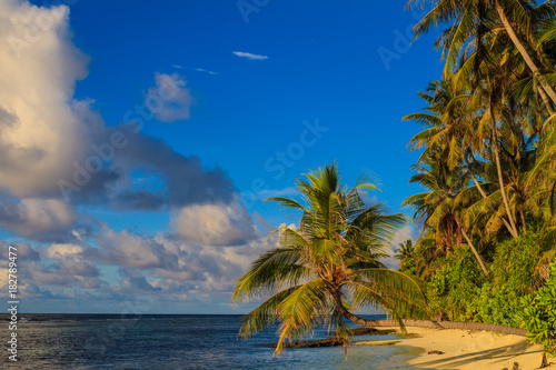 Foto op Canvas Tropical strand Tropical maldivian beach with palm and blue ocean
