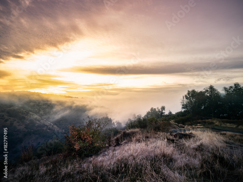 Staande foto Ochtendgloren Foresthill Sunrise - Blanket of fog