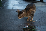 stray cat on street - 182810653