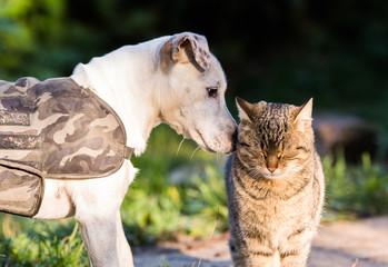 Cute jack russel dog and domestic kitten best friends