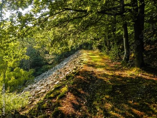 In de dag Weg in bos Saar-Hunsrück-Steig