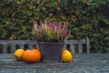 Pumpkins and heather in bucket on wooden garden table. - 182827842