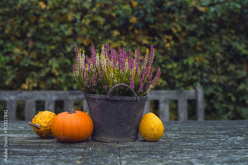 Pumpkins and heather in bucket on wooden garden table.