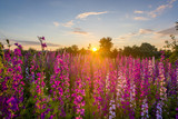 Nice, colorful, wide look at  meadow filled with red, pink and purple wildflowers, in a nice summer sunset. - 182828600