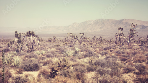Retro stylized panoramic picture of the Joshua Tree National Park landscape, California, USA.