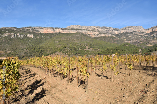 Staande foto Wijngaard vineyards in autumn near the village of La Vilella Alta, in the background the mountain of Montsant, El Priorat, Tarragona, Spain