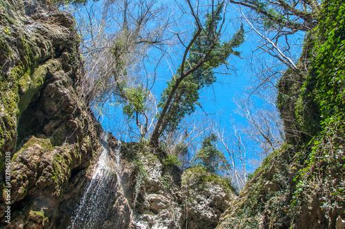 Fotobehang Bergrivier Spring forest.