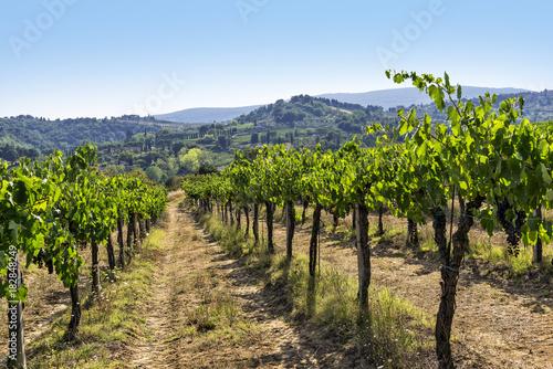 Papiers peints Bleu ciel Vineyards on the Siena hills in Tuscany