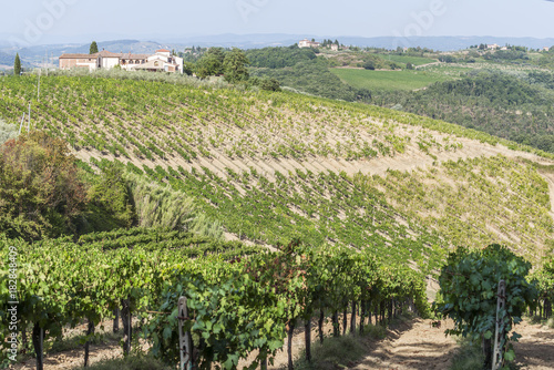 In de dag Pistache Vineyards on the Siena hills in Tuscany