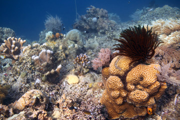 underwater world - coral reef landscape