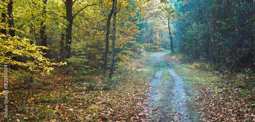 In de dag Weg in bos Tire track of car in deciduous autumn forest.