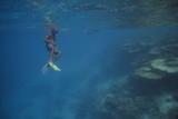 people snorkeling in blue water - 182861015