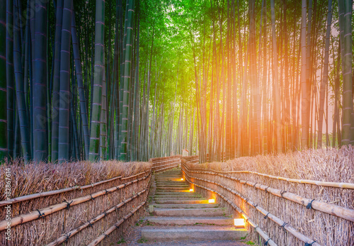 Plexiglas Bamboe Path to bamboo forest at Arashiyama, Kyoto, Japan.