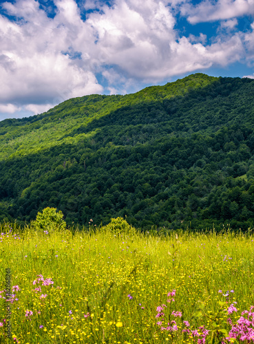 Foto op Canvas Gras grassy pasture with wild flowers in mountains. beautiful summer scenery on a fine weather day