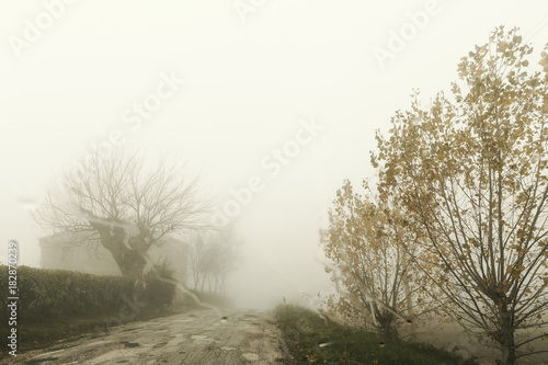 Foto op Canvas Wit Natural landscape in autumn, country road in the fog
