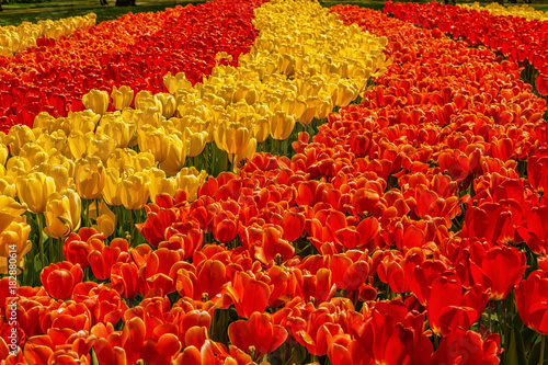 Foto op Canvas Rood traf. Beautiful flowers background.
