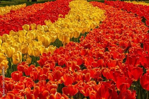 Foto op Aluminium Rood traf. Beautiful flowers background.