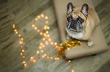 background new year 2018 christmas, year dog, french bulldog