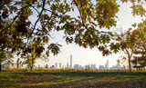 New York cityscape with autumn colored tree