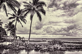 Hawaii Paradise in black and white. - 182888074