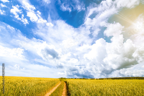 Fotobehang Zomer Autumn landscape in a field with clouds