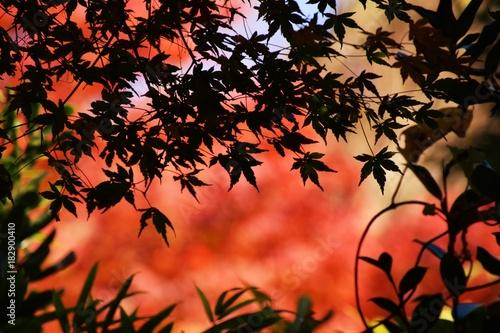Deurstickers Koraal 紅葉の季節