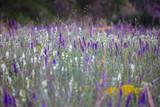 summer meadow sage background - 182903862