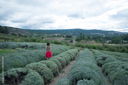 Poster Khaki Girl on a red skirt in a lavender farm
