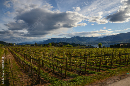 Staande foto Wijngaard Sunset in the Vineyards in Penticton , okanagan valley Canada