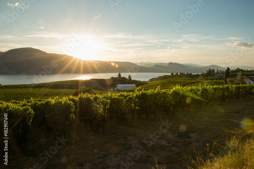 Plexiglas Bleke violet Sunset in the Vineyards in Penticton , okanagan valley Canada