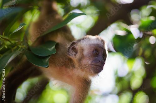 Fotobehang Aap Monkey looking out