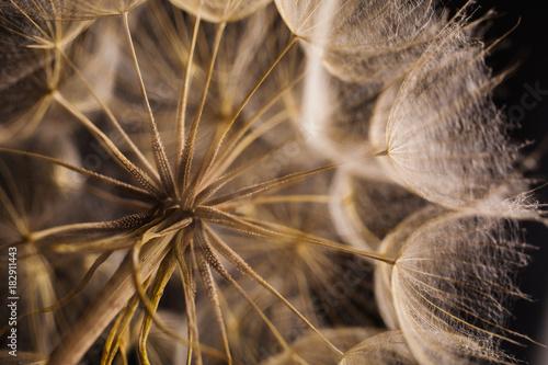 Plexiglas Paardebloemen Abstract macro photo of a dandelion on black background.