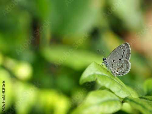 Fotobehang Vlinder gray butterfly looking somthing on green leaf