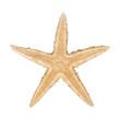 Yellowish sea starfish on a white background