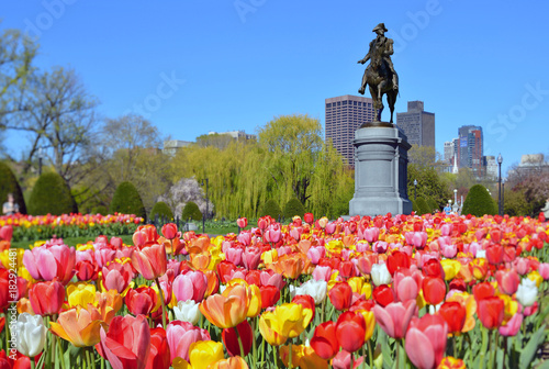 Boston Public Garden Tulips and George Washington Statue in the Spring
