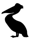 silhouette of pelican