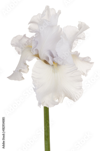Plexiglas Iris iris flower isolated