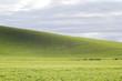 Wheat rows