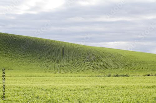 In de dag Gras Wheat rows