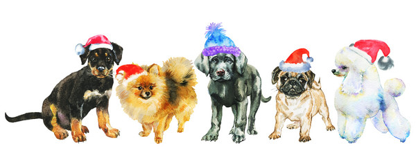 Watercolor dogs in Christmas hats. Painting New year banner on white background. Hand drawn cute pets © Cincinart
